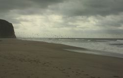 Birds in flight over the sea. Seagulls over the ocean Stock Photo