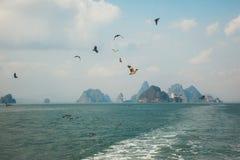 Birds In Flight in Phang Nga. Archipelago near Phuket, Thailand Stock Photo
