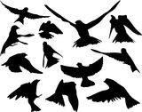 Birds in flight silhouette Stock Image