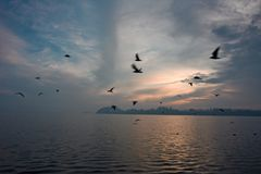 Birds in flight at sunset. On the lake Royalty Free Stock Images
