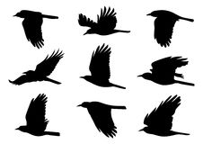 Birds in Flight - 9 Vector Illustrations Stock Image