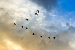 Birds fling have tailing on sky. Birds fling have tailing on blue and orange sky stock photography