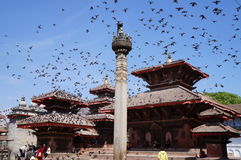 Birds flock above Durbar Square. Birds flocking above Durbar Square, Nepal Stock Image