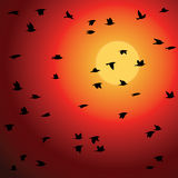 Birds flock against sunset Stock Images