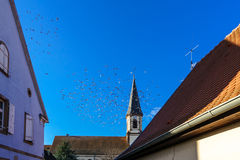 Birds flock on blue sky background Royalty Free Stock Photography