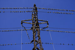 Birds. Flock of birds sitting on electric pole Royalty Free Stock Image