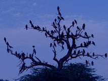 Birds flock Royalty Free Stock Photography