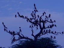 Birds flock Royalty Free Stock Photography