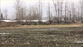 Birds flock in trees and over muddy field 1. Muddy fallow field with birds in fall stock video