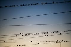 Birds flocking around the overhead power lines at Agra Cantonment railway station royalty free stock photos