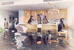 Birds in the flooding kitchen. Ocean birds in the flooding kitchen interior. Creative media mixes concept Stock Photography