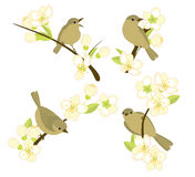 Birds on flowering branches Royalty Free Stock Photos