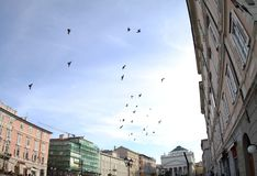 Birds fly above Trieste Italy 2019. We see a lot of pigeons above the city. They fly wherever they want. It`s a good time for them today stock image