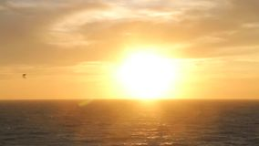 Birds fly against wind, with sunset in background at beach. Sea and sun stock video footage