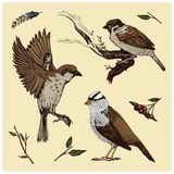 Birds fly in the air. sparrow and feather. engraved hand drawn in old sketch, vintage style for label. Nest with eggs. Animals flutter their wings. forest beas Stock Photos