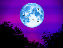 Birds fly away home and super moon in light night Stock Images