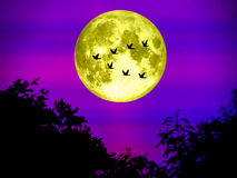 Birds fly away home super moon in light night sky Stock Images