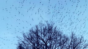 The birds fly away from the  tree crown stock video footage