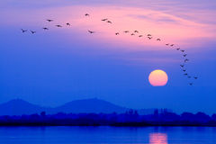 Birds fly back to the nest at sunset Royalty Free Stock Photo