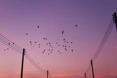 Birds fly back to the nest Stock Photo
