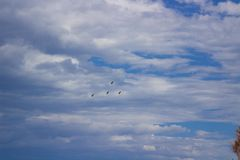Birds fly on a blue cloudy sky. 4 Royalty Free Stock Images
