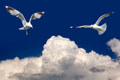 Birds fly in the blue sky Royalty Free Stock Photo