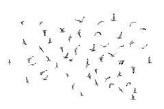 Birds fly on clear sky (b&w) Royalty Free Stock Photography