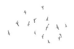 Birds fly on clear sky (b&w) Royalty Free Stock Photo