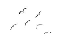 Birds fly on clear sky (b&w) Stock Photo