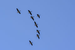 Free Birds Fly High Stock Photography - 45509242