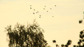 Birds fly by stock video