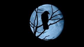 Birds Fly Off Branches In Front Of Full Moon. Bird dark against a full moon on branches at night stock footage