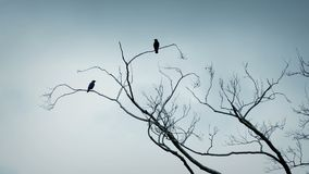 Birds Fly Off Tree Branches. Couple of birds on the tree top flying away stock video footage