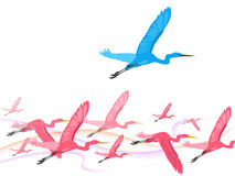 Birds fly over Stock Images