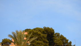 Birds Fly Over House and Palm stock footage