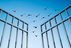 Birds fly over the open gate. Concept of success and freedom stock photography