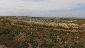 Birds circling above the dump. Birds fly over the pit of city dump stock video footage