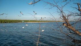 Birds fly over the river. Birds are flying over the river Royalty Free Stock Image