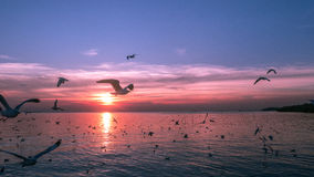 Birds fly over the river. Birds are flying over the river at sunset Stock Photo