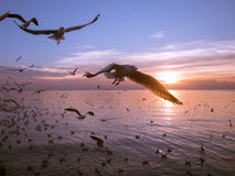 Birds fly over the river. Birds are flying over the river at sunset Royalty Free Stock Image