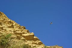 Birds. Fly over the rocky coastline, blue sky Royalty Free Stock Photo