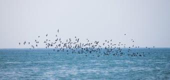 Birds fly over the sea Stock Photos