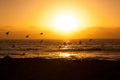 Birds fly over sea during sunset Stock Photography