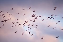 Birds fly in the bright beautiful sky above the roof. vector illustration