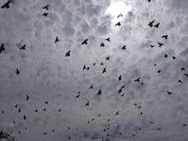Many birds fly in the sky, animals. Birds, fly, sky, nature, animals royalty free stock photos