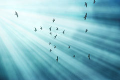 Birds Fly in Sun Rays Royalty Free Stock Photo