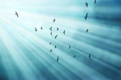Birds Fly in Sun Rays vector illustration
