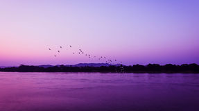 Birds fly Sunset. A flock of birds fly on river Sunset silhouette Stock Photography