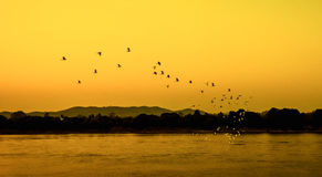 Birds fly Sunset. A flock of birds fly on river Sunset silhouette Royalty Free Stock Photo