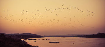 Birds fly Sunset. A flock of birds fly on river Sunset silhouette Stock Image